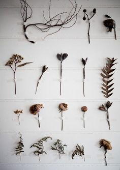 Delicate dried flowers and leaves carefully pinned to a plain, white wall by Pia Jane Bijkerk.