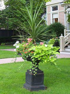 Pretty container garden - redstar spike, geraniums, sweet potato vine, trailing vinca
