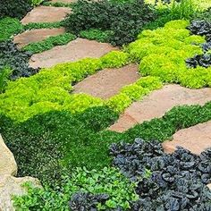 Creeping Perennials - vinca, thyme, creeping Jenny. Plant mix of summer and spring bloomers so lots of colors throughout season