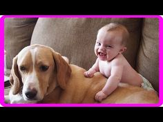 Cute Cat and Dog Love Babies Compilation NEW HD 2016 - Funny dog video - Funny cat video - http://positivelifemagazine.com/cute-cat-and-dog-love-babies-compilation-new-hd-2016-funny-dog-video-funny-cat-video/ http://img.youtube.com/vi/chWQ1sOfUas/0.jpg                                             Funny cat and baby videos   Cute Dogs And Adorable Babies compilation NEW HD Funny cat and dog fails Compilation * Funny cat action fails Videos NEW …    source