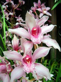 My favorite flower that I share with my first boyfriend. He gave me one for Easter when we were young. We are still friends and I always think of him when I see Orchids