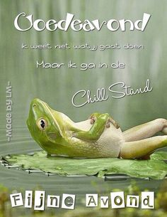 Goede avond Ga In, Kermit The Frog, Good Morning Good Night, Good Vibes, Beautiful Words, Sweet Dreams, Affirmations, Relax, Inspirational Quotes