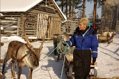 One-day Reindeer Safari We will start our trip from the main building, where we will first check that your shoes and clothes are suited for...