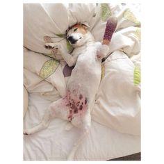Dogs life #lazydays
