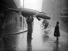 Crocodile in the Rain, Photographer Unknown Photos Du, Old Photos, Vintage Photos, Black White Photos, Black And White Photography, Vintage Photography, Street Photography, Photography Tips, Landscape Photography