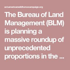 The Bureau of Land Management (BLM) is planning a massive roundup of unprecedented proportions in the Antelope and Triple B Complexes in eastern Nevada. The agency plans to remove an astounding 6,737 wild horses -- or 80 percent of the existing population -- beginning in Fall 2017.  Every one of the horses removed from the range is in danger of being killed by the BLM if Congress grants the agency's request to lift the ban on destroying healthy wild horses and burros or selling them for…