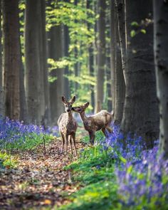 Nature View, Congratulations, Explore, Landscape, Fox, Artist, Animals, Instagram, Magic