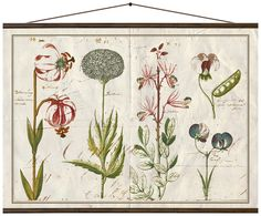 Verleihen Sie Ihren Wänden einen neuen Look. Der Digitaldruck auf Leinwand Flora mit Blumen-Drucken und weitere Wandaccessoires auf >> WestwingNow.