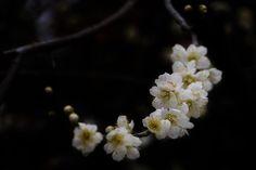 Spring has come by Yasutoshi Yamamoto on 500px