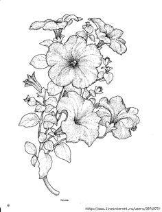 Tattoo black and white petunia black and white floral ornament petunias ccuart Choice Image