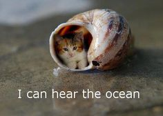 That is either a BIG shell or a small cat!