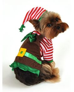 canine christmas elf dog costume from wholesale costume club yes your dog can be on hand for santa this year as much as any elf