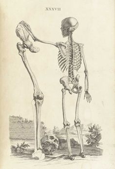 In The Good Old Days, Anatomy Drawings Were Full of Whimsy | Atlas Obscura