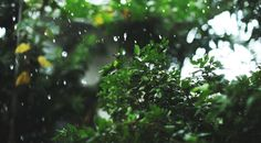 ☼ nature blog ☼
