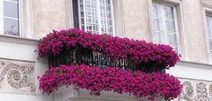 Terrazas y balcones en flor | EROSKI CONSUMER