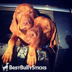 1000 images about bbs featured dogs on pinterest bully sticks dog of the. Black Bedroom Furniture Sets. Home Design Ideas
