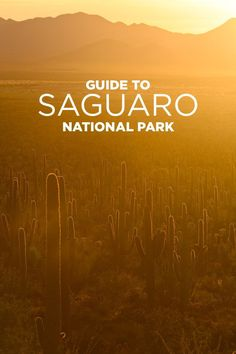 10 Things to Do in Saguaro National Park Tucson AZ. This park is a must-see when you travel to Tucson. Arizona Road Trip, Arizona Travel, Nevada, Beautiful Park, Beautiful Things, Tucson Arizona, Oro Valley Arizona, Visit Arizona, Arizona State
