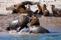 El avistaje de la fauna marina patagónica es uno de los principales atractivos de Estancia Bahía Bustamante.