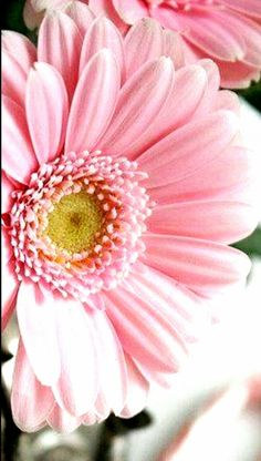 mennyfox55 Pretty Pictures, Pink Yellow, Plants, Flowers, Cute Pics, Cute Pictures, Plant, Planets