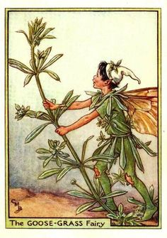 This beautiful Goose-Grass Flower Fairy Vintage Print by Cicely Mary Barker was printed and is an original book plate from and early Flower Fairy Book.Cicely Barker created 168 flower fairy illustrations in total for her many books Cicely Mary Barker, Flower Fairies Books, Grandes Photos, Grass Flower, Kobold, Fairy Pictures, Vintage Fairies, Beautiful Fairies, Fantasy Illustration