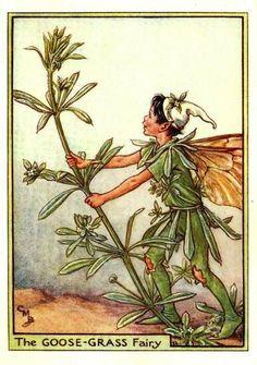 Goose-Grass Fairy