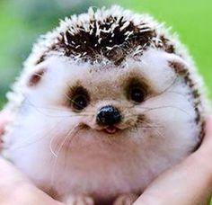 Image result for happy animal pictures