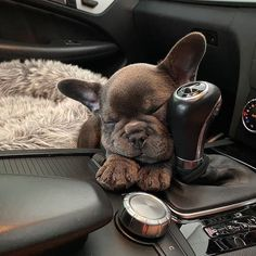 (notitle) < (notitle),Französische Bulldoggenbabys Related posts:I hope this video lights up your day🙂 - tik tokBuild A Baby Yoda Free Printable! Cute Baby Dogs, Cute Little Puppies, Cute Dogs And Puppies, Cute Little Animals, Cute Funny Animals, Doggies, Dog Language, French Bulldog Puppies, French Bulldogs