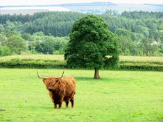 Photos of National Museum of Rural Life, East Kilbride - Attraction Images - TripAdvisor