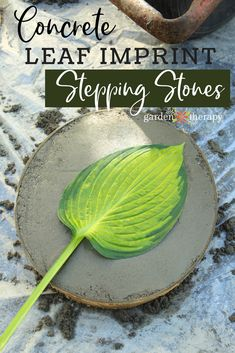 DIY Leaf Print Stepping Stones - DIY Leaf Print Stepping Stones – Leaf print stepping stones can be made in an afternoon and cost - Concrete Stepping Stones, Concrete Leaves, Garden Stepping Stones, Concrete Steps, Concrete Crafts, Diy Garden Projects, Garden Crafts, Best Diy Projects, Outdoor Projects