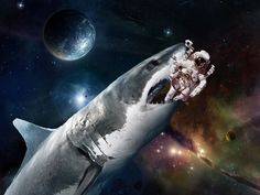 shark in space - Google Search