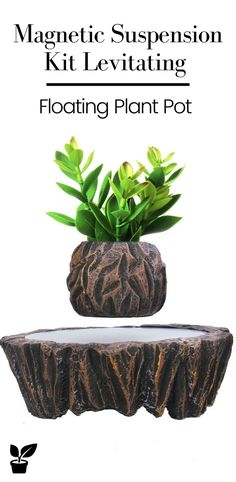 • Easy to install, water and maintenance. • Perfect for small indoor bonsai or other small plants. • It is a magnetic-floating bonsai pot, floating in the air, rotating 360 degrees automatically when the power is turned on. • For home or office decor. This is an awesome high tech gadget with enlightenment education that people of all ages will enjoy. • Not only conducive to the improvement of indoor environmental quality but also the best regulator of physical and mental health. #FloatingPlants. Small Plants, Air Plants, Potted Plants, Cactus Plants, Floating Plants, Indoor Bonsai, Garden Gifts, Garden Furniture, Vegetable Garden