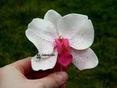Sugar Gumpaste Moth Orchid Wedding cake decorations You can buy this in my Etsy shop https://www.etsy.com/your/shops/Euthymiacakes