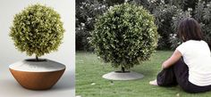 The Poetree - A Funeral Urn That Lets You Plant A Tree From Ashes. What a beautiful, eco friendly tribute! A memorial tree planter with ceramic ring marker. Green Funeral, Funeral Planning, Funeral Ideas, Tree Planters, Funeral Urns, Funeral Caskets, Memory Tree, Funeral Memorial, After Life