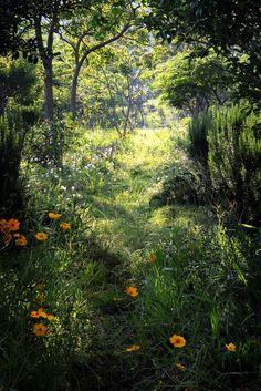 joli coin de forêt