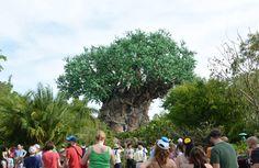 Tips Parques Disney: Cómo organicé viaje a Orlando