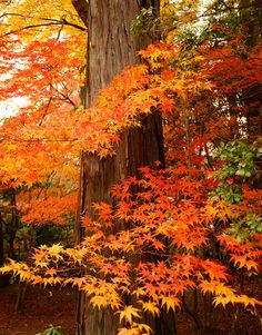 Autumn in Shinnyo-dou temple, Kyoto