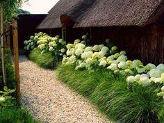 https://www.flower-garden.pl/hortensja-limelight