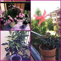 #flower #flamingo #cottage