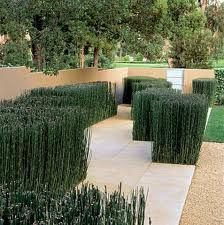 A straight stone path leading up to a Hillsborough home is broken by clumps of horsetail for better chi -- per Feng Shui principles. Image appeared in Andrea Cochran: Landscapes Limestone Paving, Limestone Wall, Landscape Architecture, Landscape Design, Garden Design, Horsetail Reed, Modern Outdoor Living, Living Fence, Contemporary Building