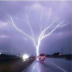A photograph of the super-rare Lightning Tree in Oklahoma.