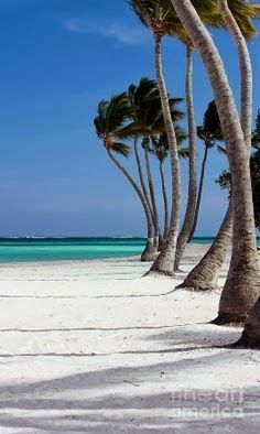 Punta Cana, Dominican Republic.    ***White sands and palm trees!***