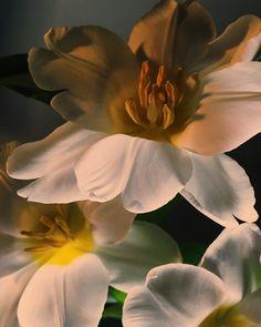 Flower Aesthetic, Aesthetic Photo, Belleza Natural, Botany, Trees To Plant, Aesthetic Wallpapers, Art Inspo, Planting Flowers, Flower Arrangements