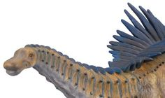 Agustinia close up - a long-necked dinosaur model in 1:40 scale from Collecta.