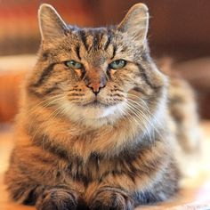 Tuesday's Cute And Aww: Meet 26-Year-Old Corduroy, The Oldest Living Cat In The World!