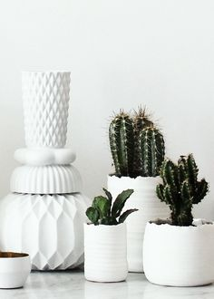 white containers and cacti