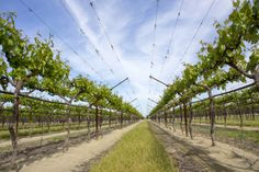There are nearly 500 table grape farming operations in California.