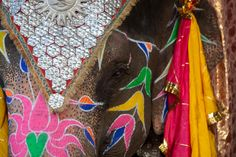 Colorful hand painted details on an elephant in India.