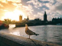 Ihr wollt ein Wochenende in die englische Hauptstadt? Dann schaut euch unsere 5x5 Insider Tipps London an, so entgeht euch definitiv nix in der Großstadt!