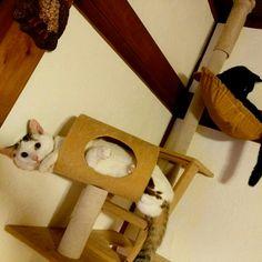 #Cat #Baby #子猫 #黒猫 #白猫
