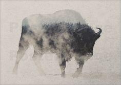 Poster Bison im Nebel
